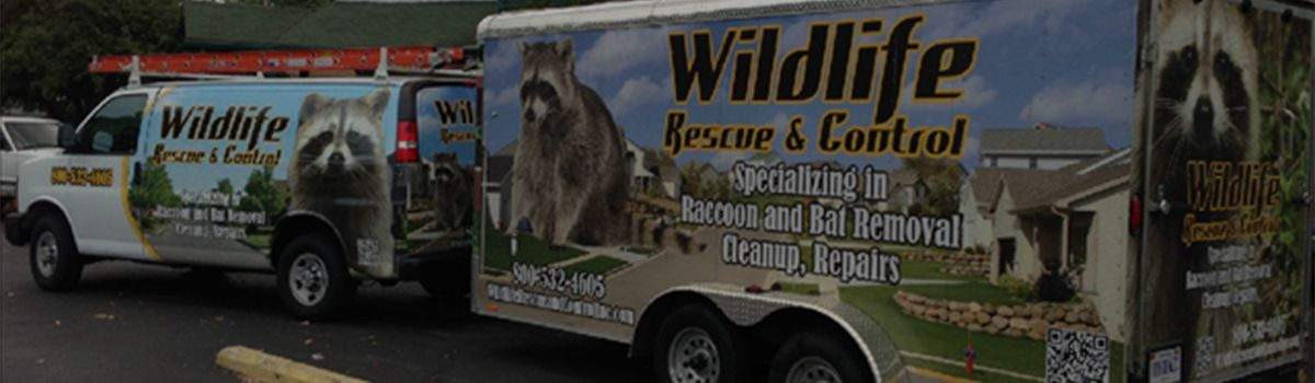 Wildlife Rescue and Control Indianapolis